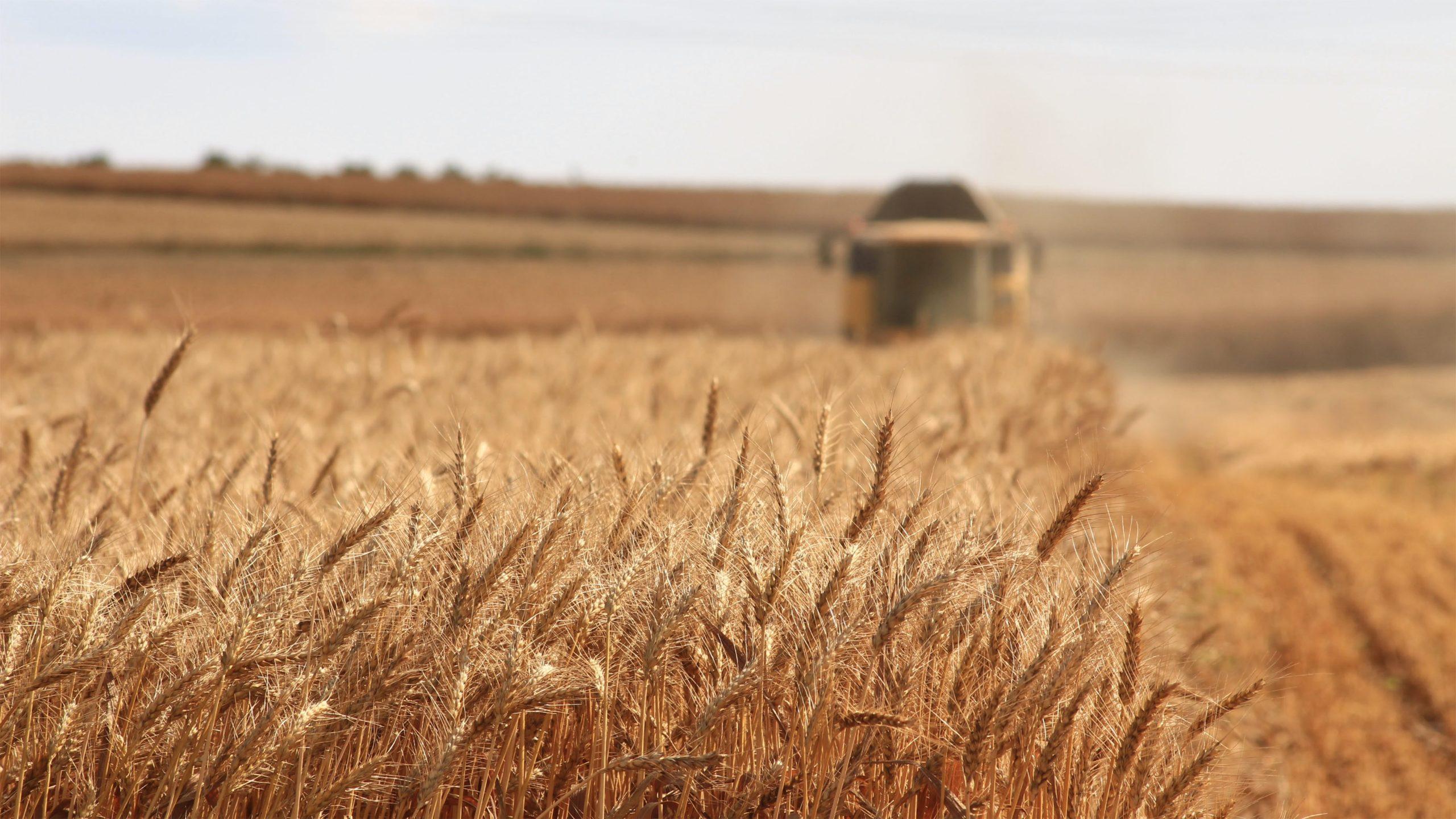 Business-urile inovative din agricultură și alimentație, o investiție cu potențial de viitor